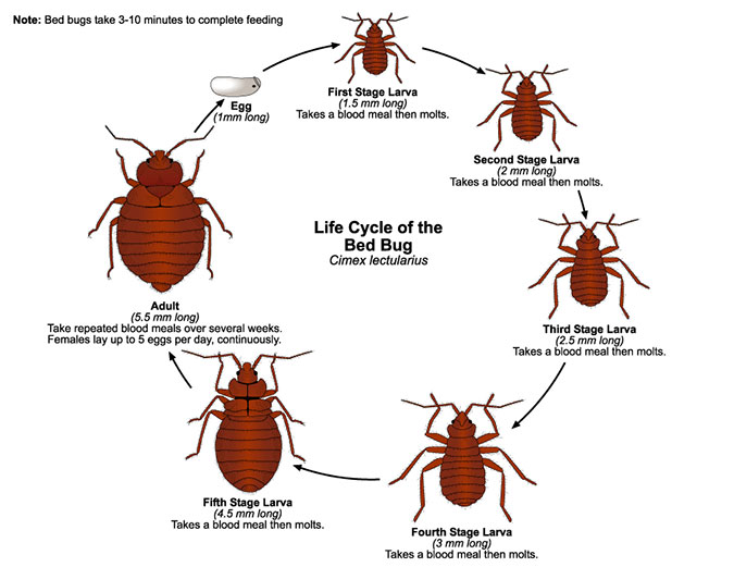 Bed Bugs Extermination Columbus, Ohio